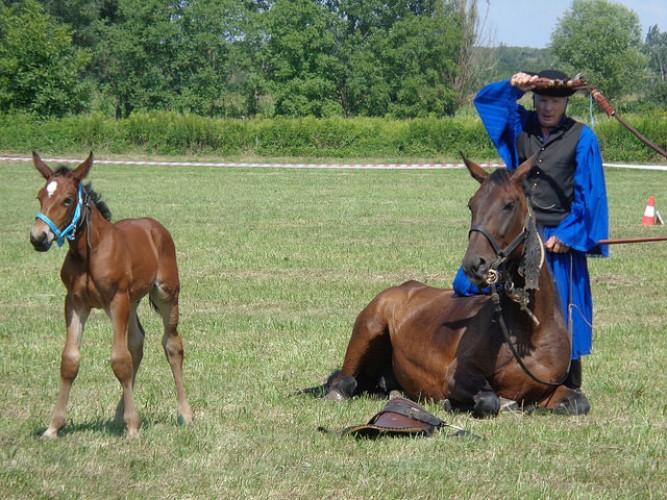 Látványos volt a csikósbemutató a lovastalálkozón