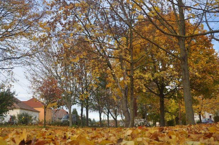 Gyönyörű az őszi Győrsövényház