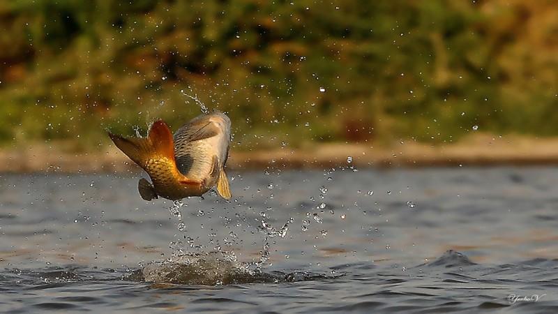Közgyűlésre várja a tagokat a horgászegyesület
