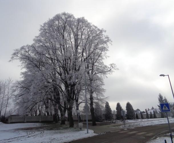 Fotók, videó a havas-zúzmarás Győrsövényházról