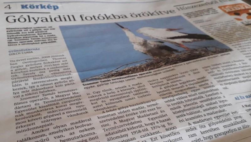 Cikk Győrsövényház legkülönlegesebb gólyapárjáról