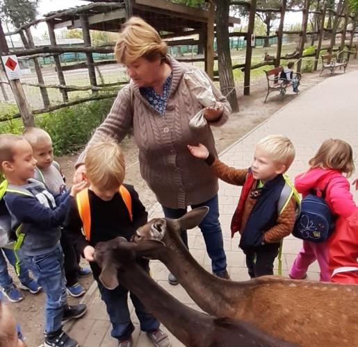 A győri állatkertben jártak az óvodások